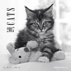 Cats 2017