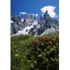 Alpen Jahrweiser Postkartenkalender 2009