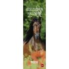Pferde 2019 Lesezeichen & Kalender