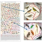 POST001 Bird Phylogeny Poster