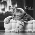 Cats, Broschürenkalender 2014 .