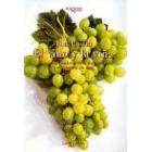 El vino y la viña. Geografia historica de la viticultura y el comercio del vino