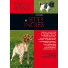 El Setter inglés. Perros de raza
