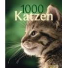 1000 Gatos