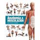 Anatomía y musculación