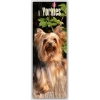 Yorkshire Terriers 2017