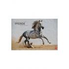 Pferde - Meine Freunde 2016