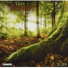 Deep Forest 2019 (WONDERFUL WORLD)