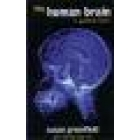 The human brain (A guided tour)